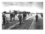 Cultivating Cotton Demonstration Wall Decal by George W. Ackerman