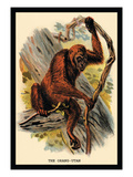 The Orang-Utan Wall Decal by G.r. Waterhouse