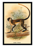 Green Guenon Wall Decal by G.r. Waterhouse
