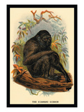 The Siamang Gibbon Wall Decal by G.r. Waterhouse
