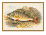Perch Wall Decal by A.f. Lydon