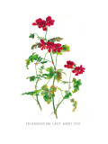 Pelargonium Lady Mary Fox Wall Decal by H.g. Moon