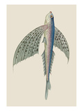 Winged Fish Wall Decal by J. Forbes