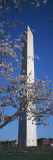 Cherry Blossom in Front of an Obelisk, Washington Monument, Washington Dc, USA Wall Decal by  Panoramic Images