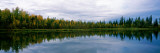 Reflection of Trees in a Lake, Alaska, USA Wall Decal by  Panoramic Images