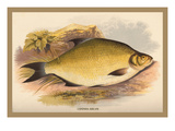 Common Bream Wall Decal by A.f. Lydon