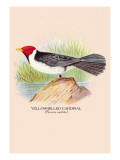 Yellow-Billed Cardinal Wall Decal by Arthur G. Butler