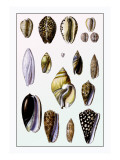 Shells: Convoltae and Orthocerata Wall Decal by G.b. Sowerby