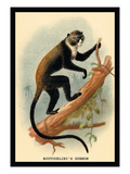 Boutourlini's Guenon Wall Decal by G.r. Waterhouse