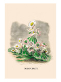 Marguerite Wall Decal by J.J. Grandville