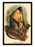 Everett's Langur Wall Decal by G.r. Waterhouse