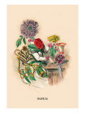 Dahlia Wall Decal by J.J. Grandville