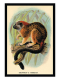 Geoffroy's Tamarin Wall Decal by G.r. Waterhouse