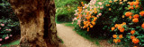 Isabella Plantation, Richmond Park, London, England Wall Decal by  Panoramic Images