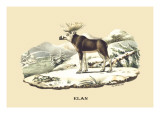 Elan Wall Decal by E.f. Noel