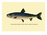 The Rangeley Trout Wall Decal by H.h. Leonard