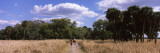 People Walking on a Trail, Myakka River State Park, Sarasota, Florida, USA Wall Decal by  Panoramic Images
