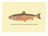 The Sunapee Trout Wall Decal by H.h. Leonard