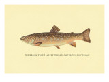 The Brook Trout Wall Decal by H.h. Leonard