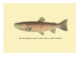 The Red Throat Trout Wall Decal by H.h. Leonard