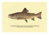 The Brook Trout, Showing Dark or Early Spring Coloration Wall Decal by H.h. Leonard