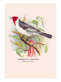 Dominican Cardinal Wall Decal by Arthur G. Butler