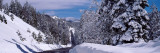 Snow Covered Trees in a Forest, Emigrant Gap, California, USA Wall Decal by  Panoramic Images