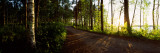 Trees Along a Road, Saimaa, Joutseno, South Karelia, Southern Finland, Finland Wall Decal by  Panoramic Images