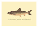 The Great Lake Trout Wall Decal by H.h. Leonard