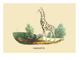 Giraffe Wall Decal by E.f. Noel