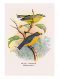 Violet Tanager Wall Decal by Arthur G. Butler