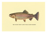 The Golden Trout Wall Decal by H.h. Leonard