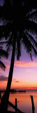 Silhouette of Palm Trees at Dawn, Pine Island, Lee County, Florida, USA Wall Decal by  Panoramic Images