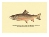 The Brook Trout, Showing Bright or Early Fall Coloration Wall Decal by H.h. Leonard