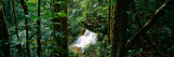 View of Waterfall in a Forest, President Figueiredo Rain Forest, Amazon, Brazil Wall Decal by  Panoramic Images