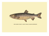 The Tahoe Trout Wall Decal by H.h. Leonard