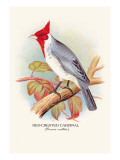 Red-Crested Cardinal Wall Decal by Arthur G. Butler