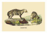 Civette Wall Decal by E.f. Noel