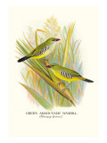 Green Amaduvade Waxbill Wall Decal by Arthur G. Butler