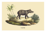 Tapir Wall Decal by E.f. Noel