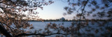 Cherry Blossom with Memorial in Jefferson Background, Tidal Basin, Potomac River, Washington DC Wall Decal by  Panoramic Images