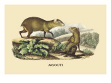Agouti Wall Decal by E.f. Noel