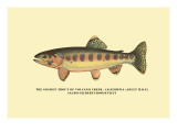 The Golden Trout of Volcano Creek Wall Decal by H.h. Leonard