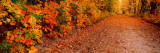 Road Passing Through Autumn Forest, Traverse City, Grand Traverse County, Michigan, USA Wall Decal by  Panoramic Images