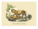Lion et Lionne d'Afrique Wall Decal by E.f. Noel