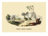 Zebu, Sans Cornes Wall Decal by E.f. Noel