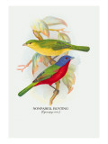 Nonpareil Bunting Wall Decal by Arthur G. Butler