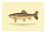 The Golden Trout of Soda Creek Wall Decal by H.h. Leonard