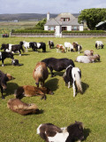 Shetland Ponies at Gott Farm Photographic Print by Holger Leue