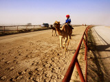 Race Camels in Home Straight of Kuwait Camel Racing Club During Training Session Photographic Print by Mark Daffey